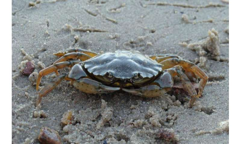 Non-native marine species' spread, impact explained by time since introduction