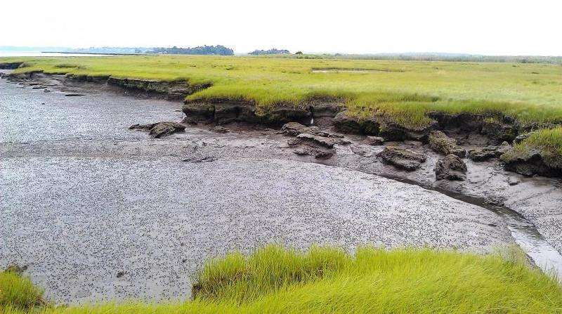 Normal weather drives salt marsh erosion