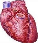 Novel stem cell approach promising for heart failure