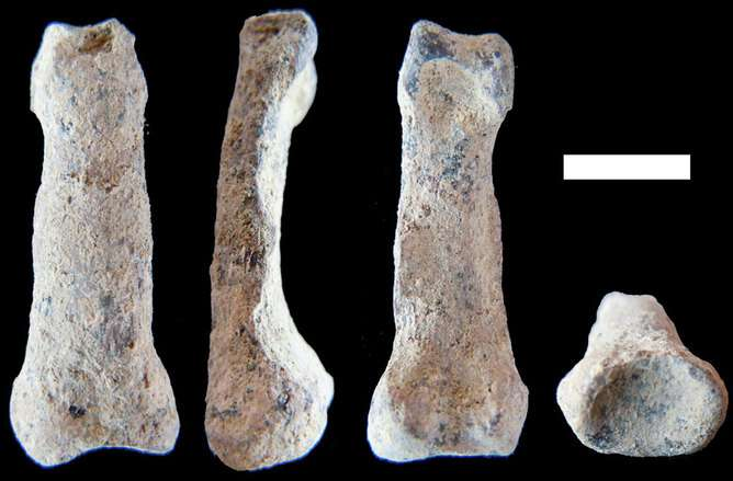Oldest human-like hand bone may help us understand the evolution of tool making