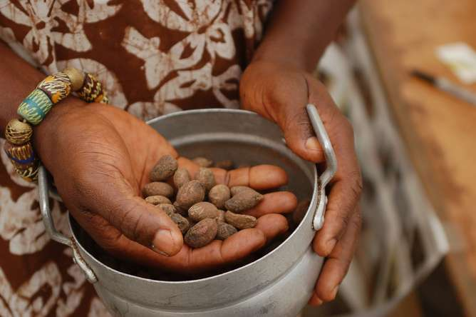 Opinion: How tasty forest foods can help solve the global hunger crisis