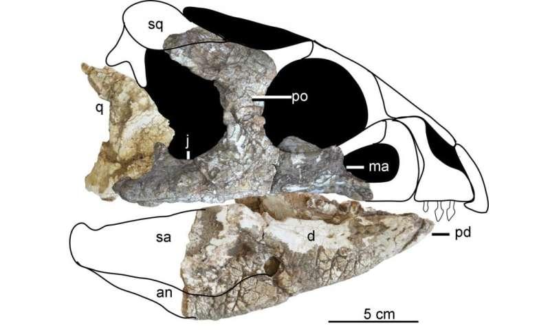 'Ornamental' faced ceratopsian found in China