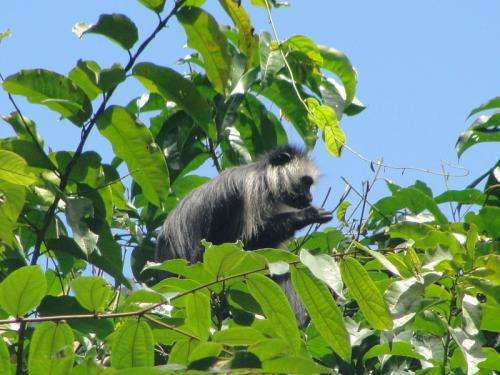 Passive acoustic monitoring method for the detection of chimpanzees and two monkey species