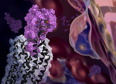 Pictured together for the first time: A chemokine and its receptor