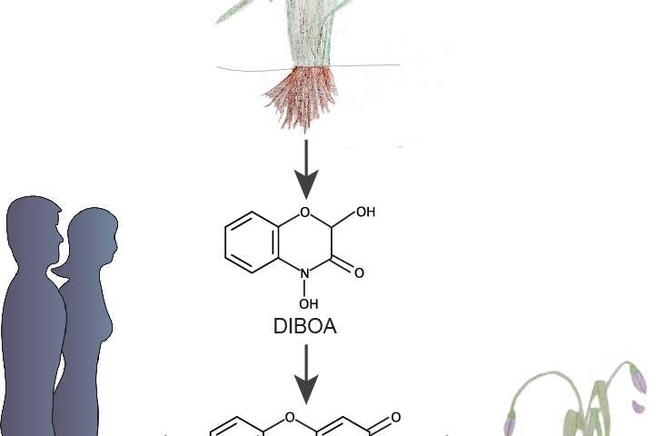 Plants defend their territory with toxic substances