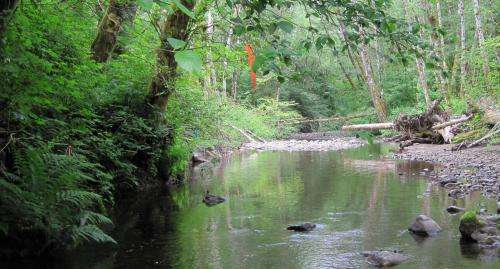 Plants' defensive responses have downstream effects on nearby ecosystems