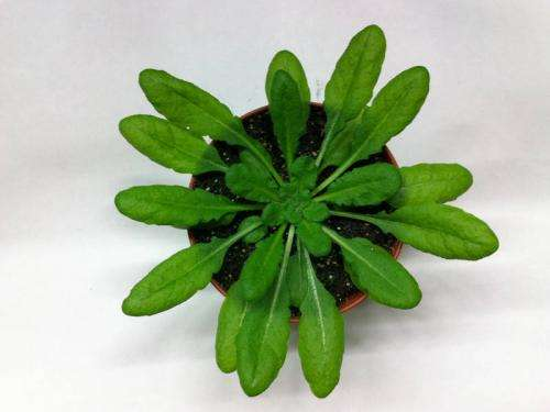 Plants detect bacterial endotoxin in similar process to mammals