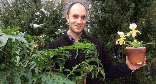 Plants survive better through mass extinctions than animals