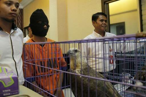 Police display an Indonesian man arrested on suspicion of selling eagles on Facebook in Surabaya city