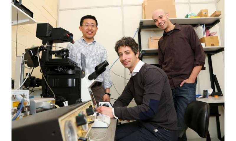 Preventing deformed limbs: New link found between physical forces and limb development