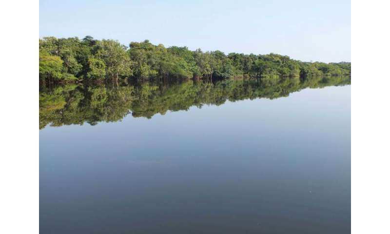 Protection for Brazilian wetlands