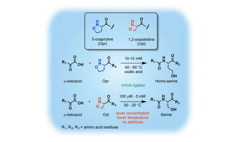 Rapid chemical synthesis of proteins by a new amino acid partner