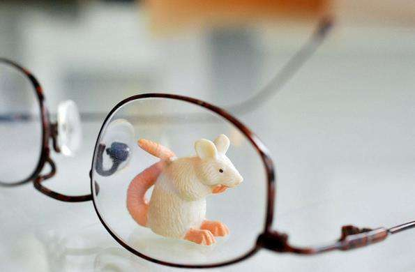 'Rat vision' may give humans best sight of all