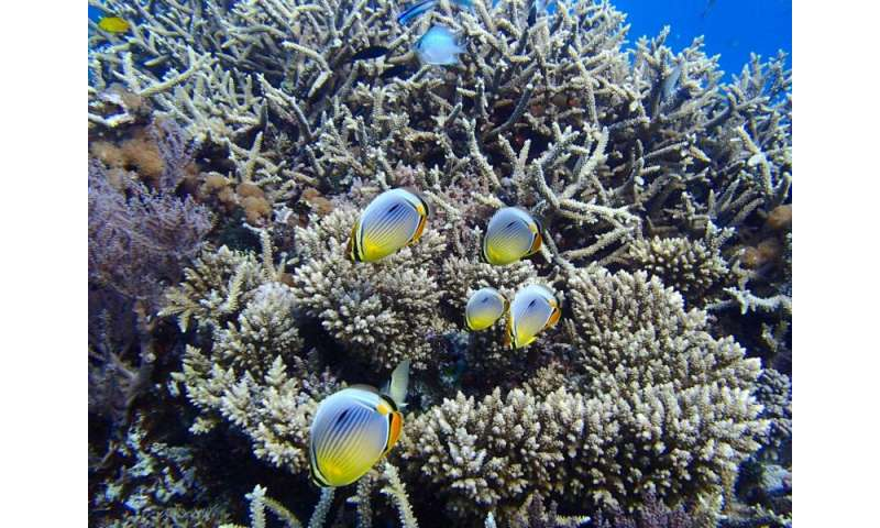Recipe for saving coral reefs: Add more fish