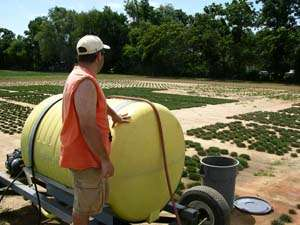 Recycled water, salt-tolerant grass a water-saving pair