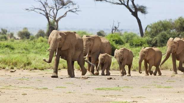Reduce elephant poaching through communal land ownership