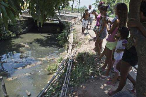 Residents of the Tereirao shantytown in Recredo dos Bandeirantes, western Rio de Janeiro, watch broad-snouted caimans swimming i