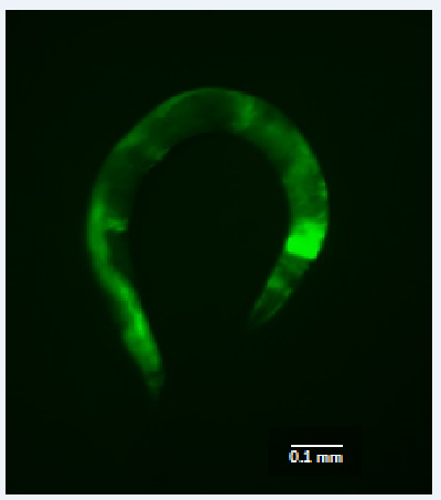 Restoring cellular energy signals may treat mitochondrial diseases in humans