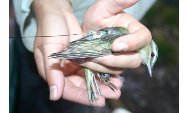 Risk assessment, for the birds