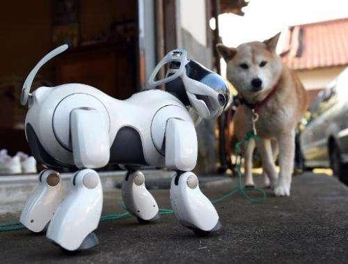 Robot dog AIBO is seen next to 'Kuma', a Shiba Inu breed, outside the Kofuku-ji temple in Isumi, Japan's Chiba prefecture