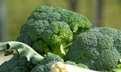 Robotic harvesting of broccoli could be coming to a field near you