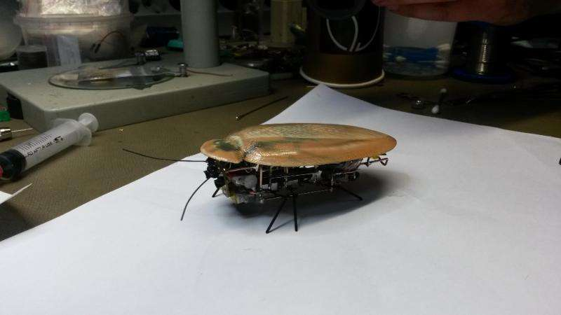 Robot mimics cockroach in Russian research initiative