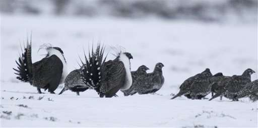 Sage grouse plan aims for balance between industry, wildlife