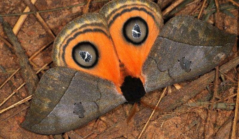 Scientists estimate 10,000 species of moth live in Madidi National Park