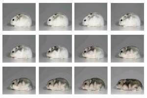 Seasonal body clock discovered in animals