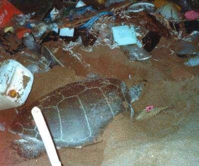 Sea turtles face plastic pollution peril
