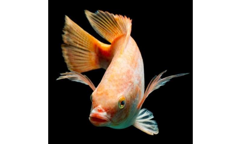 Selective breeding and immunization improve fish farm yields