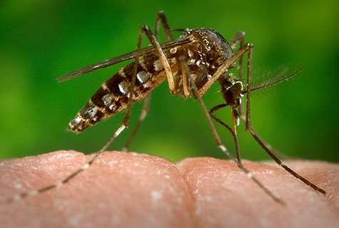 Shared symptoms of Chikungunya virus, rheumatoid arthritis may cloud diagnosis