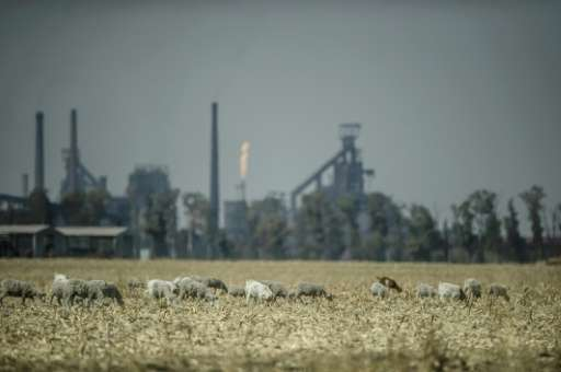 Sheep graze near the Sasol Gas Engine power plant in Sasolburg, South Africa, on August 26, 2015