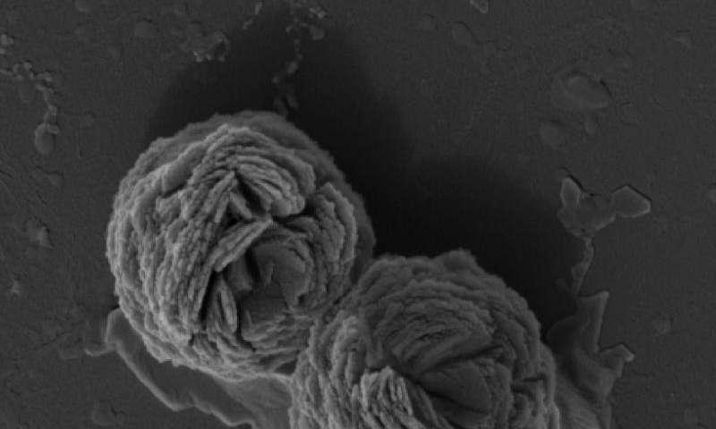 Shrinking tumors with an RNA triple-helix hydrogel glue