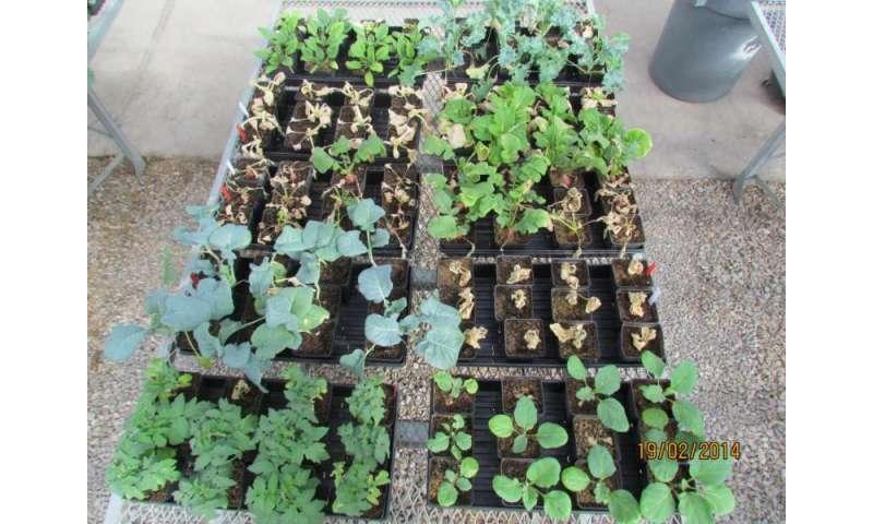 Simulated seawater flooding decreases growth of vegetable seedlings