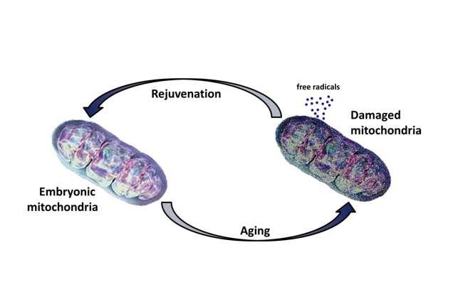 Singapore scientists discover rejuvenation factors