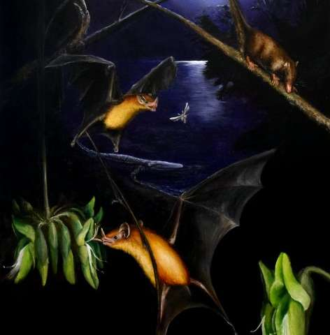 Single tooth analysis of oldest-known plant-visiting bat fossil suggests it was omnivorous