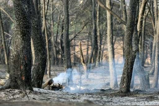 Smoke billows from burnt trees in the Valle de las Cinco Villas, in Asin near Zaragoza on July 5, 2015