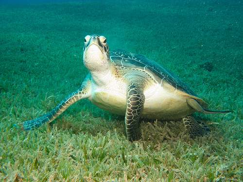 Solving the seagrass mystery