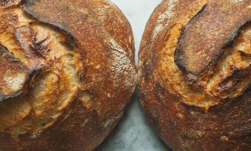Sourdough made from specific bacteria key to tasty, salt-reduced bread