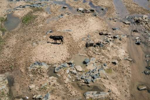 South Africa's drought, blamed on theglobal cyclical extreme weather system El Nino, is the country's worst since 1982