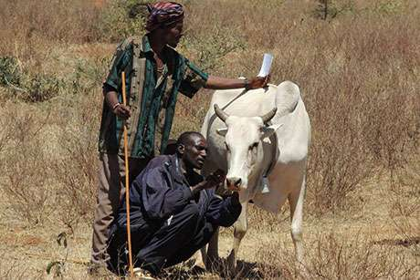 Space-age technology points African herders in right direction
