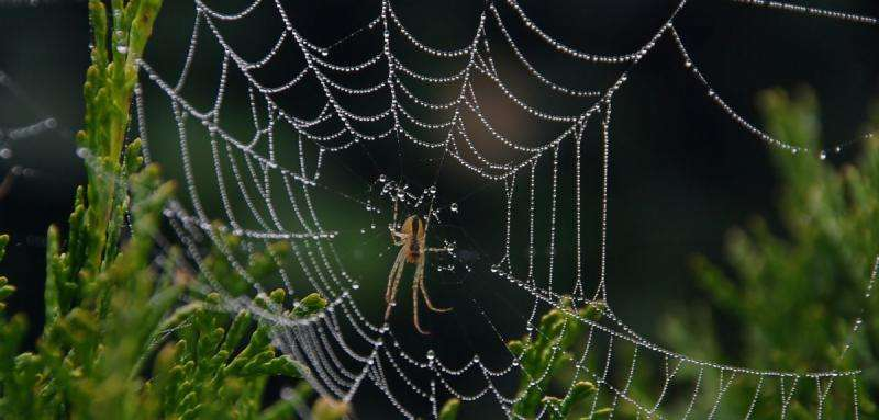 Spider signal threads reveal remote sensing design secrets