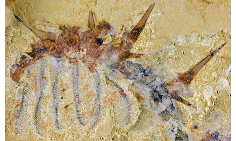 Spiky monsters: New species of 'super-armored' worm discovered