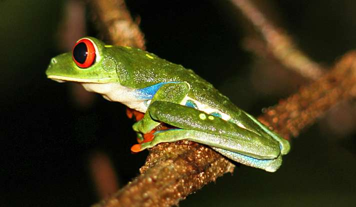 Spotting the knowledge gaps in biological species data