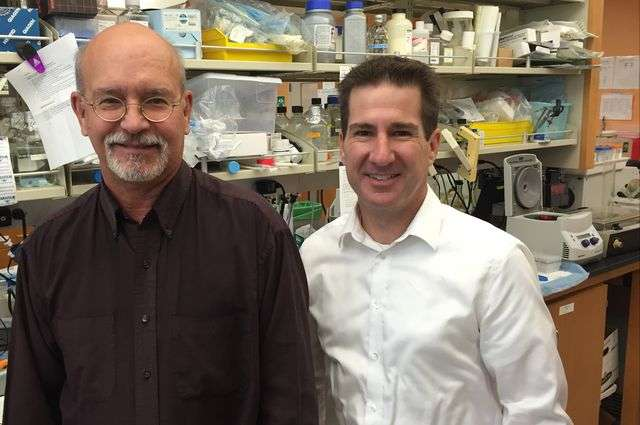 Stem cell gene therapy holds promise for eliminating HIV infection