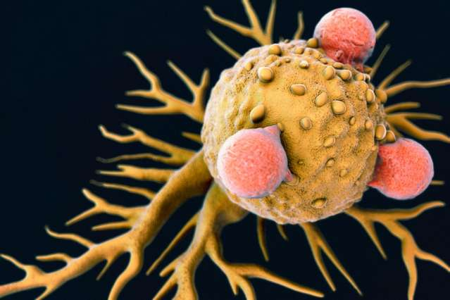 Stimulating both major branches of the immune system halts tumor growth more effectively
