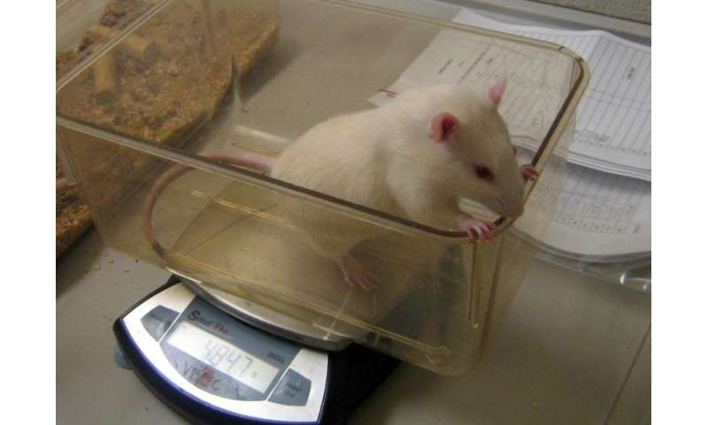 Stress in adolescence prepares rats for future challenges