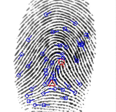 Stuck on you: Research shows fingerprint accuracy stays the same over time