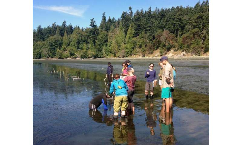 Student collaboration leads to first results describing sick sea star immune response